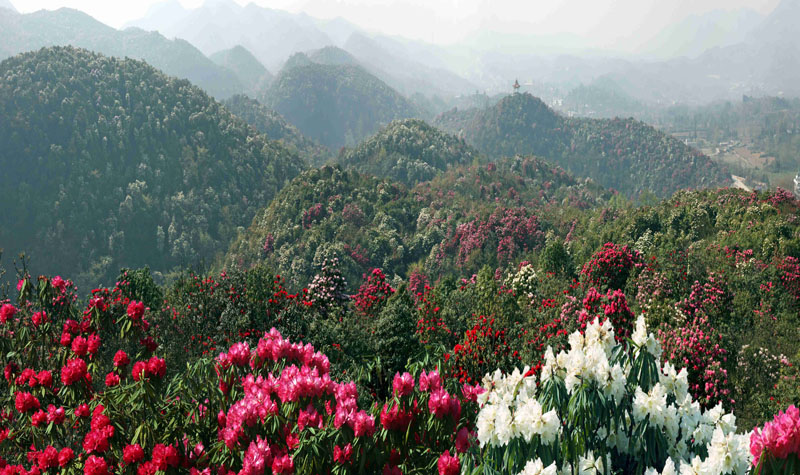 贵州百里杜鹃风景区