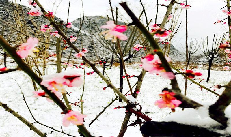 同程首页景区门票贵州景区门票六盘水景区门票梅花山国际滑雪场