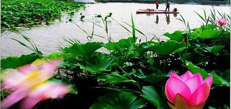 寿光林海生态博览园
