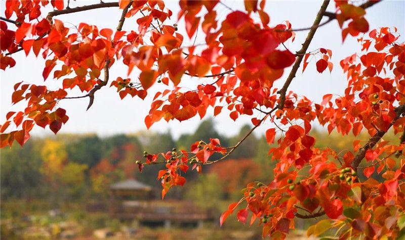 江苏三台山国家森林公园