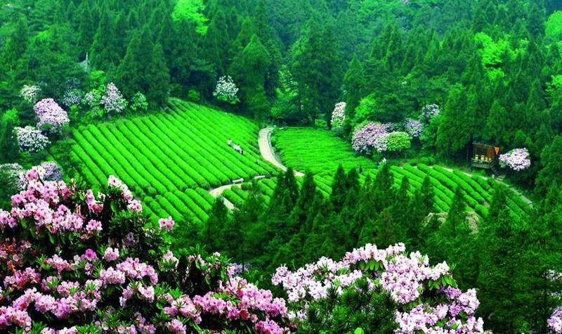 华顶国家森林公园
