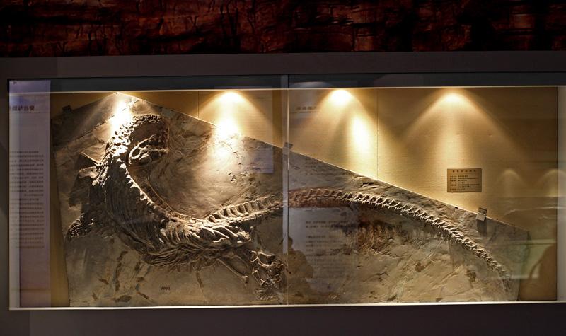 关岭化石群