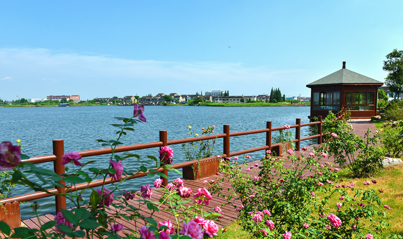 鹅湖玫瑰文化园