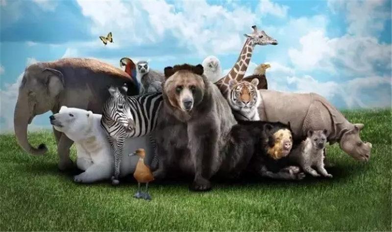 宿州野生动物园分为车行区,步行区,国际大马戏(筹建中),散养区四大