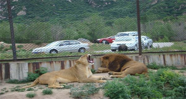 【八达岭长城动物园】八达岭+野生动物园1日游