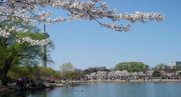 北京玉渊潭赏樱花+紫竹院公园游船+动物园+熊猫馆一