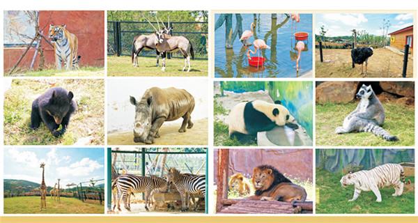 白犀(动物园吉祥物),河马