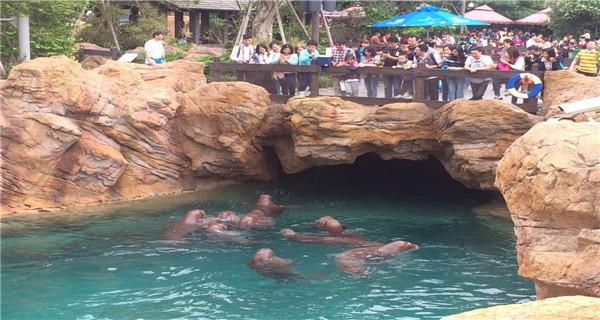 【畅玩双长隆】 广州长隆野生动物园+国际大马戏