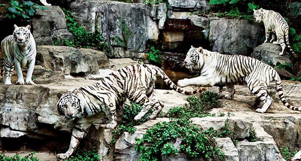 【品味广东】 珠海长隆海洋王国-广州长隆野生动物园
