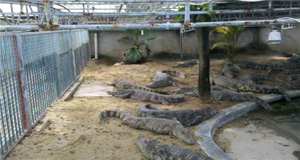 鳄鱼剪自动往返电路图