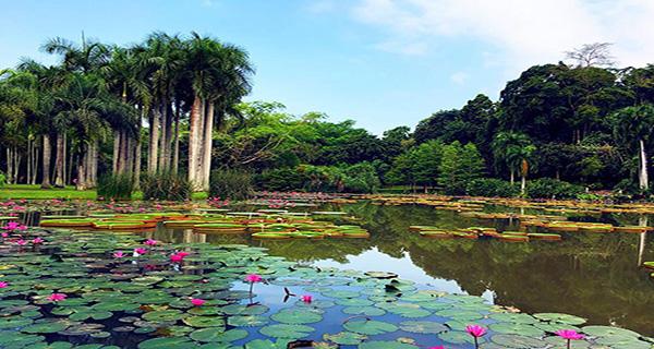 西双版纳野象谷-原始森林公园-勐泐大佛寺--勐仑植物