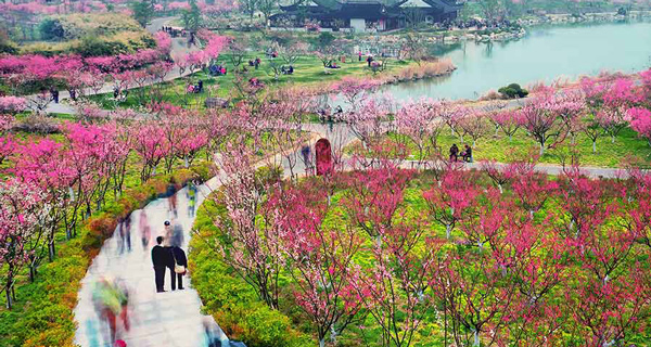 【同程快乐大巴】 春季赏花,海湾国家森林公园梅花节1日游>赏梅花,坐