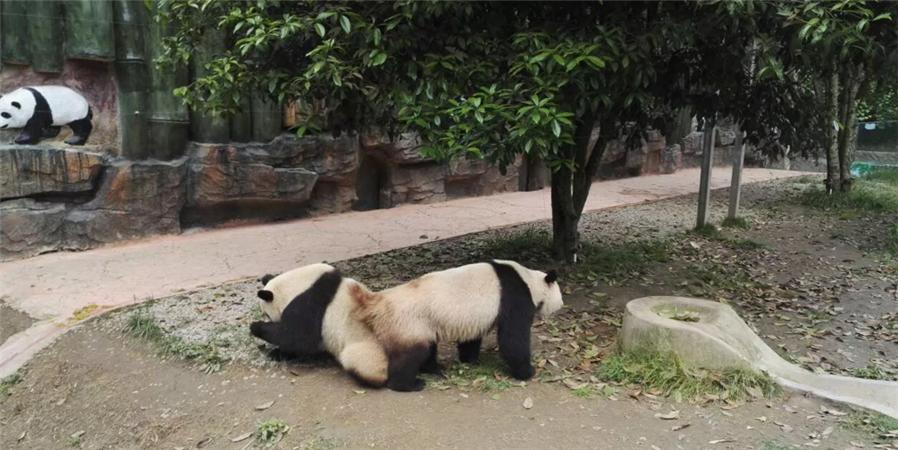 贵州森林野生动物园位于贵阳市修文县