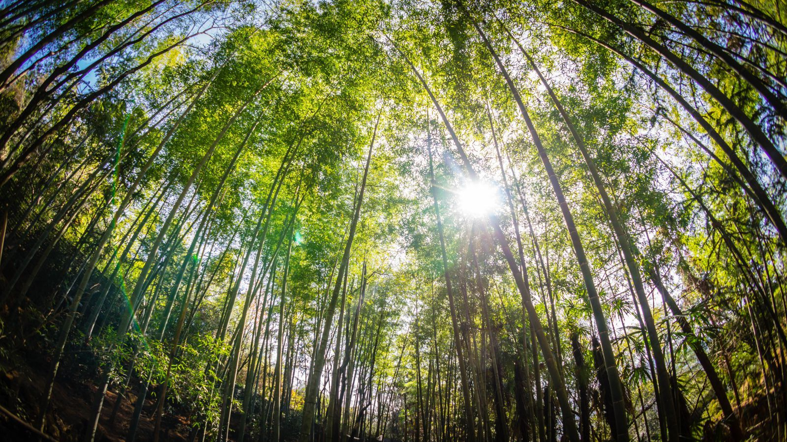 享采茶,紫砂,品美味竹筒饭,探秘深山竹林之旅,住云海间度假酒店 1晚