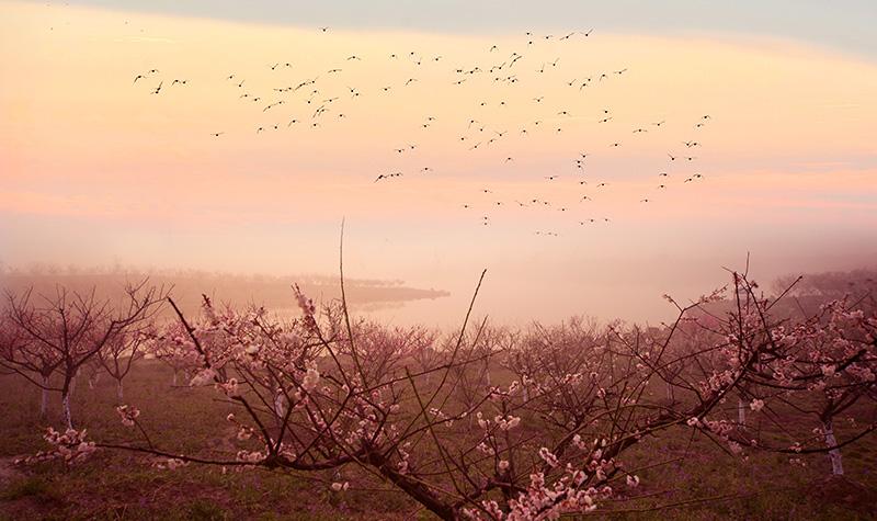 距上海市中心60公里,上海海湾国家森林公园,东接临港新城,南临杭州湾